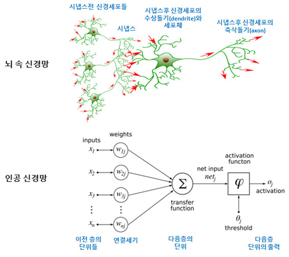 뇌 속 신경망과 인공 신경망.jpg